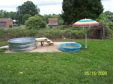 backyard dog pool dog playground ideas dogs pinterest pools doggie