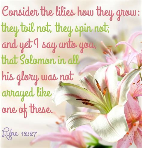 lilies images  pinterest scriptures bible scriptures  bible quotes