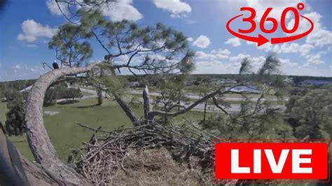 southwest florida eagle cam southwest florida eagle cam 360 youtube