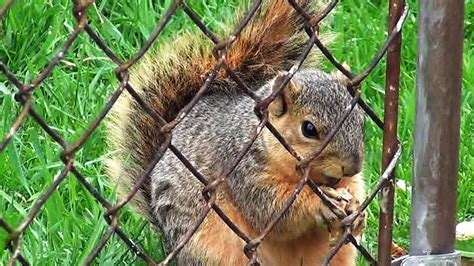 what to feed squirrels in backyard 100 what to feed squirrels in backyard how to