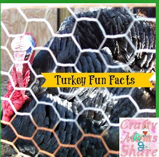 crafty moms share: fun facts about turkeys & a turkey