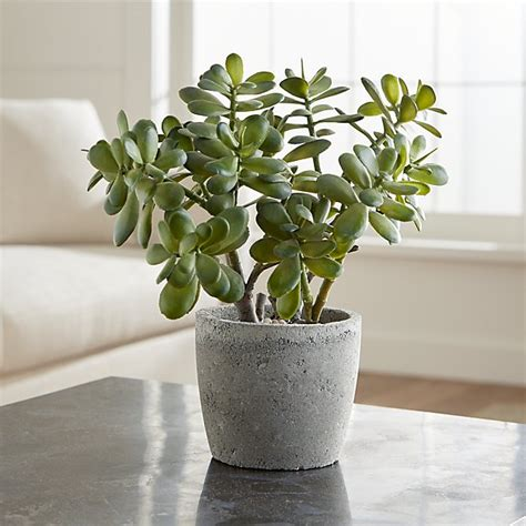 Livingroom Arrangements potted artificial jade plant crate and barrel