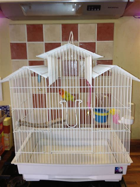fischers love bird with cage deal kent pets4homes