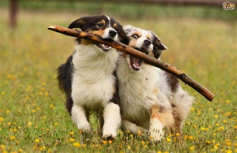 two dogs what does your s breed say about you dogvacay official