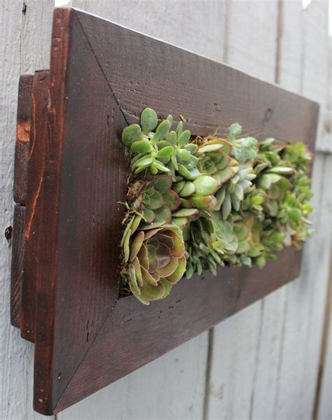 Succulent Living Wall Planter by Vertical Living Succulent Wall Indoors Or Outdoors 100