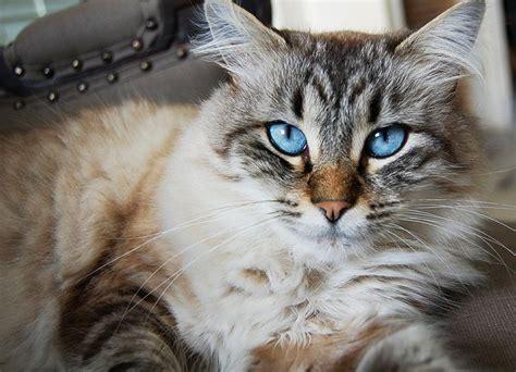 imagenes que se mueven gatos porque los gatos mueven la cola y la levantan con fotos