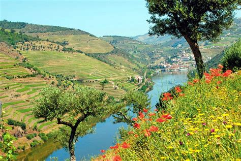 Porto Brief Schweiz Italien douro schiffsreise porto alto douro porto 8 tage ab