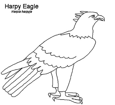 coloring page harpy eagle harpy eagle coloring pages