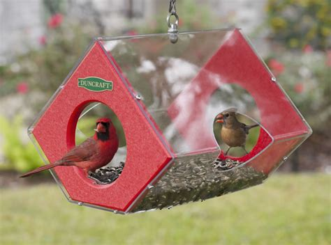 Cardinal Bird Feeders duncraft duncraft eco strong cardinal fly thru bird feeder