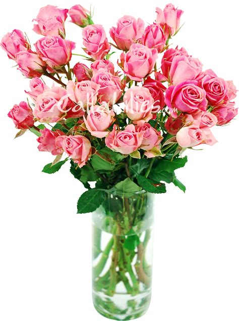 Vases Of Roses by Pictures Of Flowers In A Vase Beautiful Flowers