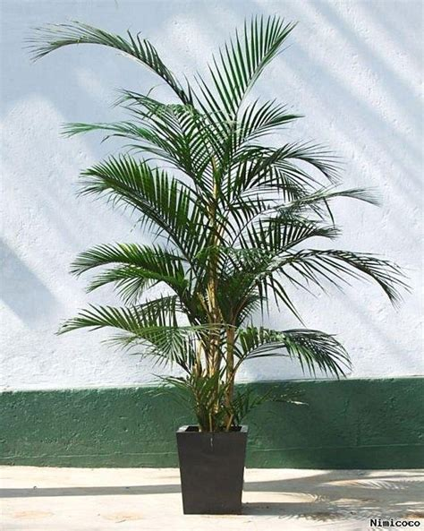 ideas  palm plants  pinterest apartment