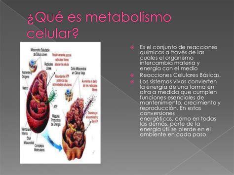 que es layout celular metabolismo celular