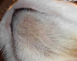 script girl feline acne