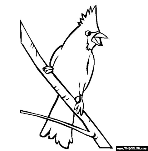 cardinal coloring pages preschool free coloring pages alphabet c is for cardinal birds