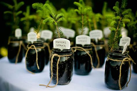 Wedding Favors Trees by Diy Wedding Plant Favors Are For A Green Wedding