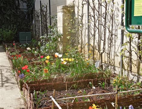fruit trees in small gardens you can grow that gardening jones