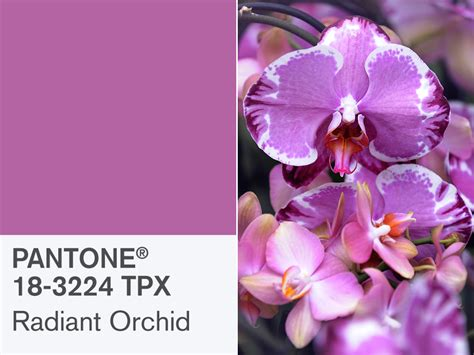orchid colors pantone s radiant orchid is 2014 s color of the year