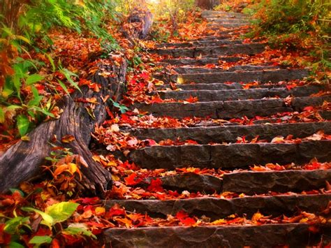 Fall 5 Steps To Your Fresh Beautiful Glowing Skin by Imagenes Paisajes Oto 241 Ales Im 225 Genes Taringa