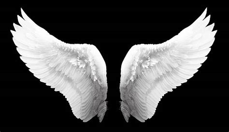 imagenes reales red wings royalty free angel wings pictures images and stock photos