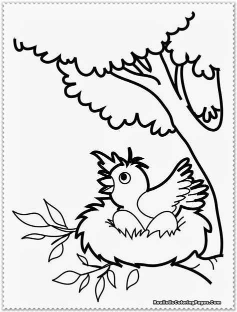 preschool coloring pages of birds bird coloring pages realistic realistic coloring pages