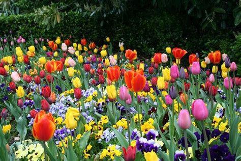 imagenes flores de jardin jardines