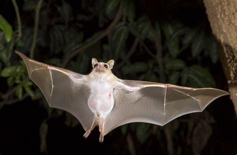 15 fun facts about bats and how you can help charity