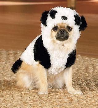pug panda costume in panda costume animals wearing