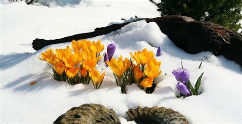 piante da giardino resistenti al freddo piante da giardino resistenti al freddo arreda il giardino
