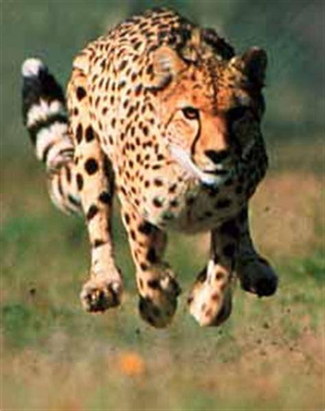 animals zoo park: the worlds fastest animals top 10