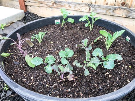 28 Best Sacramento Vegetable Gardening Tomato Garden Sacramento Vegetable Gardening