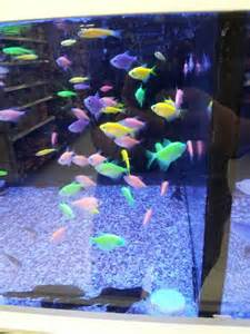 Walmart fish   Things i want   Pinterest