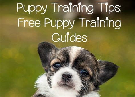 free puppy classes puppy tips free puppy guides