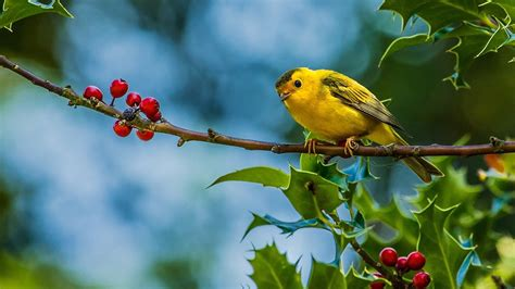 wallpaper with birds birds wallpapers best wallpapers