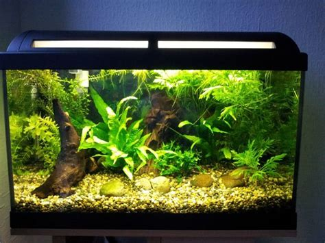 aquarium design pic 28 modern fish tanks that inspire relaxation