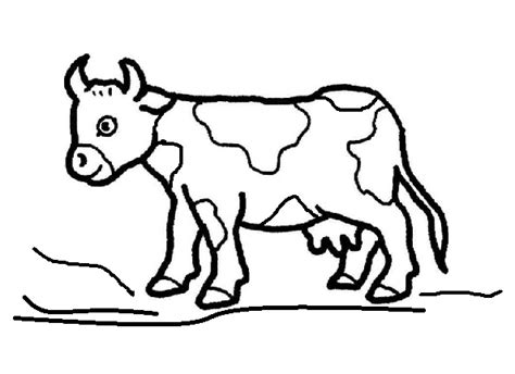 preschool cow coloring page cow coloring pages for kindergarten and preschool