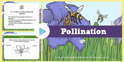 Pollination Worksheet Ks2 by Cycle Flower Pollination Task Setter Powerpoint Pack
