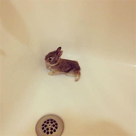 what to do with baby bunnies in backyard 710 best images about sooooooooo cute bunnies on