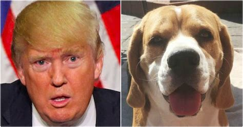 trump s face found in a dog s ear cnn video quot exact image quot of donald trump has been found in a dog s ear