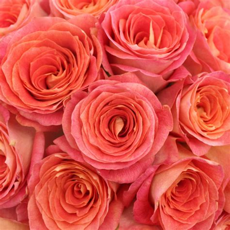 Industrial Home Decor Wholesale Coral Sherbet Big Fun Rose