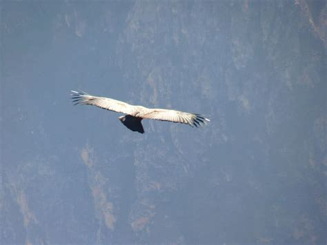 top 10 highest flying birds in the world the mysterious