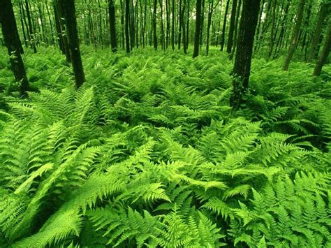 Forest L by Ferns Ethan S World