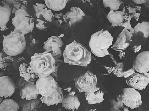 wallpaper black and white roses tumblr backgrounds black and white roses google search