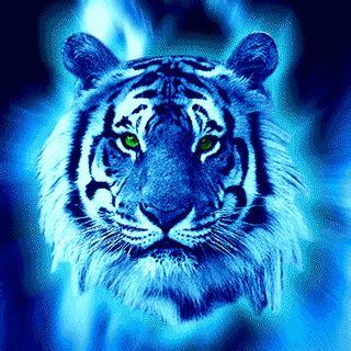 bewegende tijgers plaatjes en animatie gifs animaatjes.nl