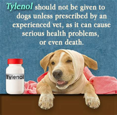 tylenol dosage for dogs is tylenol safe for dogs