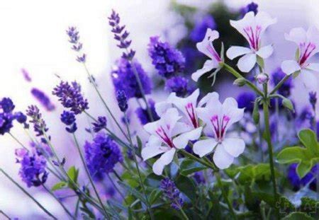 delicate  simple beauty flowers nature background