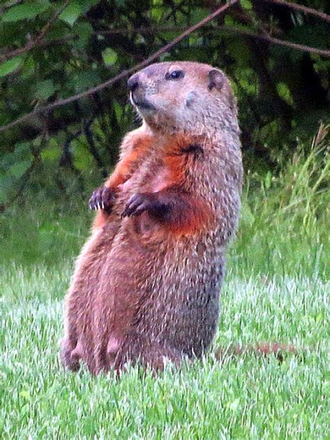 groundhog day groundhog name enjoy winter groundhog lands