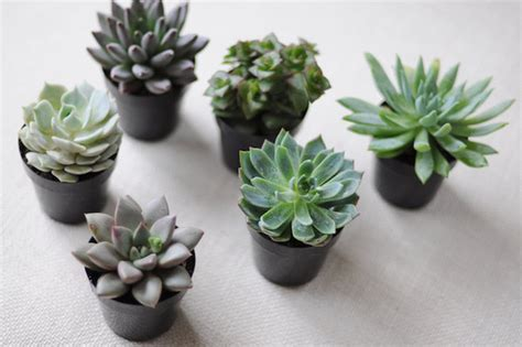 diy simple succulents project wedding