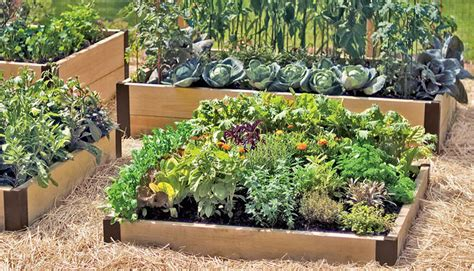 Kitchen Herb Garden Kit by A Guide To Raised Beds Gardening In Raised Beds Square