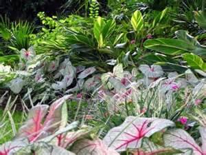 make shade garden with tropical plants interior design