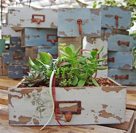 pianta grassa appartamento piante grasse d appartamento 28 images coltivare